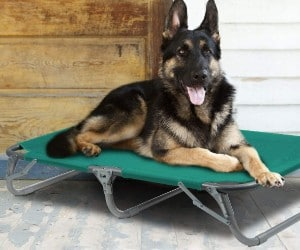 GigaTent Elevated Pet Cot review