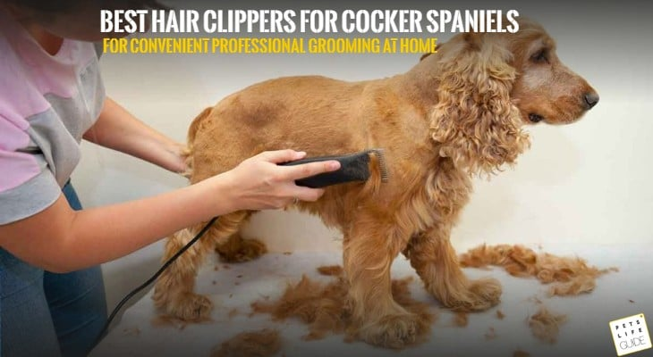 best Hair clippers for cocker spaniel