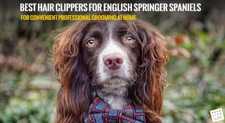 best hair clippers for spaniel