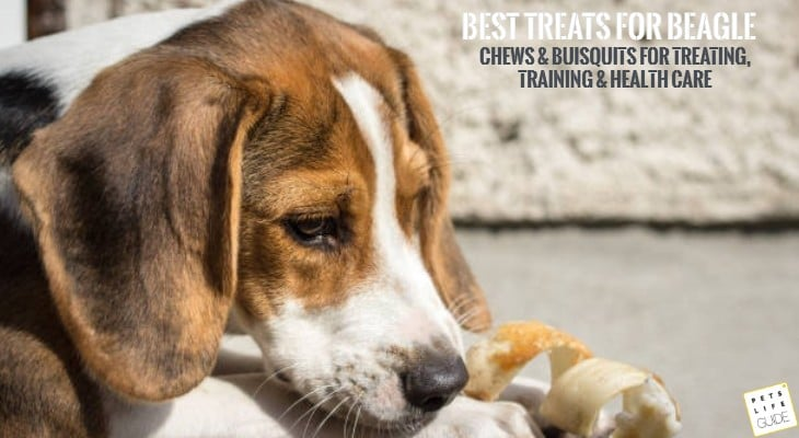 Best Treats for Beagle