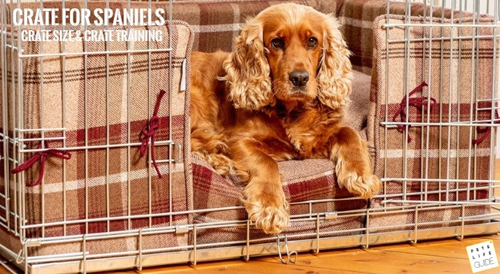 Choosing Crate for Spaniels_ Size, Training, Gear