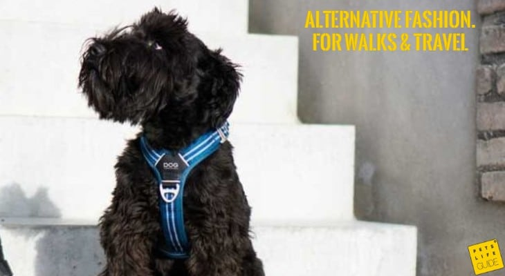 Best Harness for Giant Schnauzer