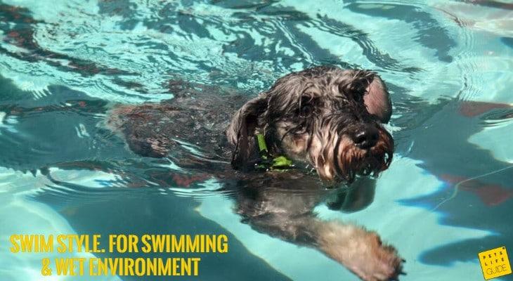 waterproof collar for Schnauzer