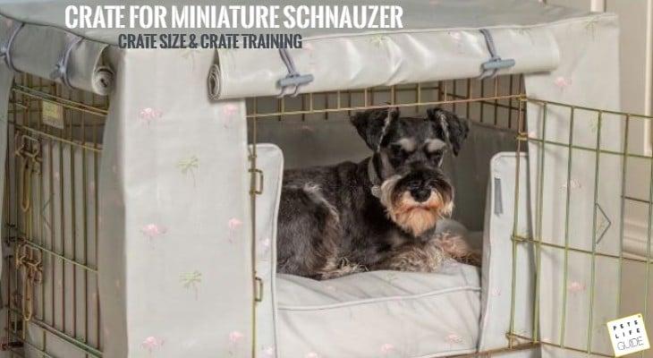 best crate for miniature schnauzer