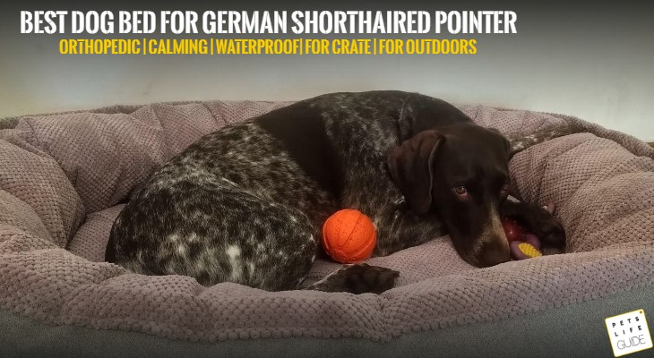 best dog bed for German shorthaired pointer