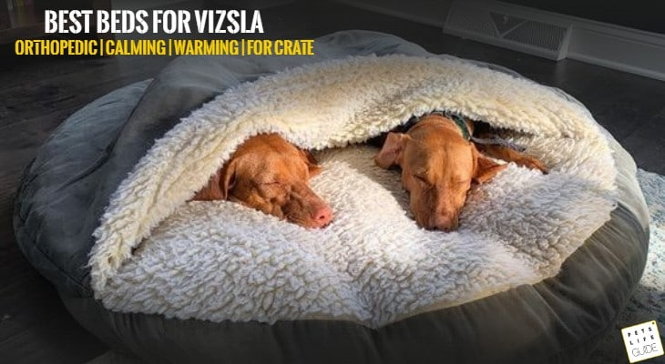 best dog beds for vizsla