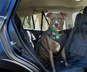 Barkbox 2-in-1: Car Seat Cover & Dog Bed review