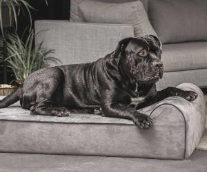 Big Barker Dog Bed, Headrest Edition review