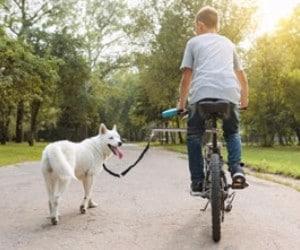 ODIER Bike Dog Leash review