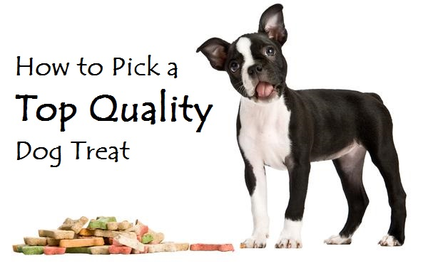 dog treat choosing