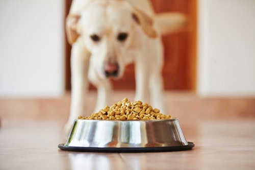 dog food preservatives