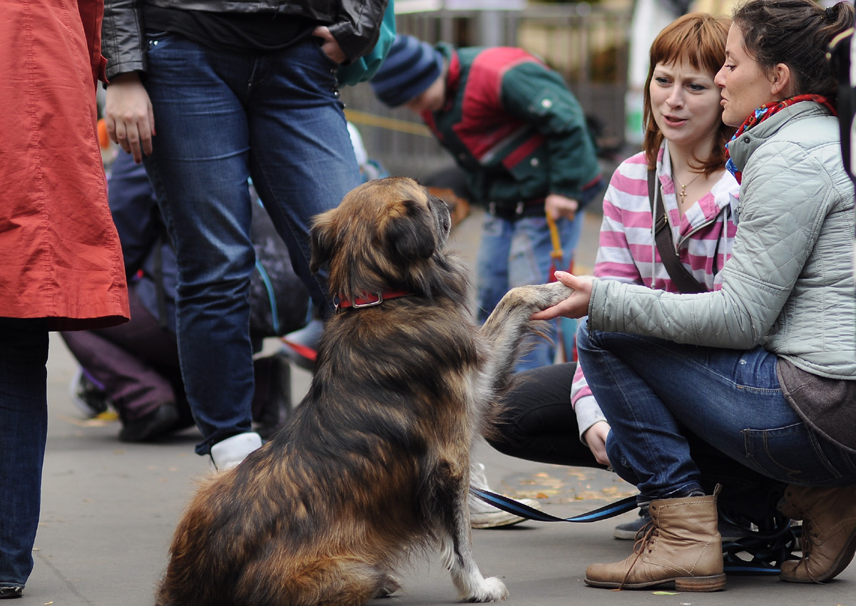 How To Help Homeless People With Pets