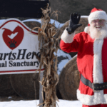 winter holiday christmas heartsherd