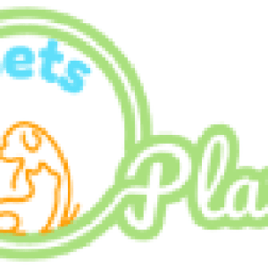 Blue-and-Yellow-Macaw - Pets Plaza