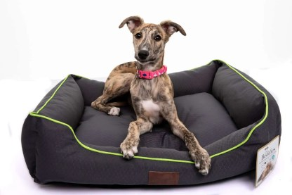waterproof bed for dogs