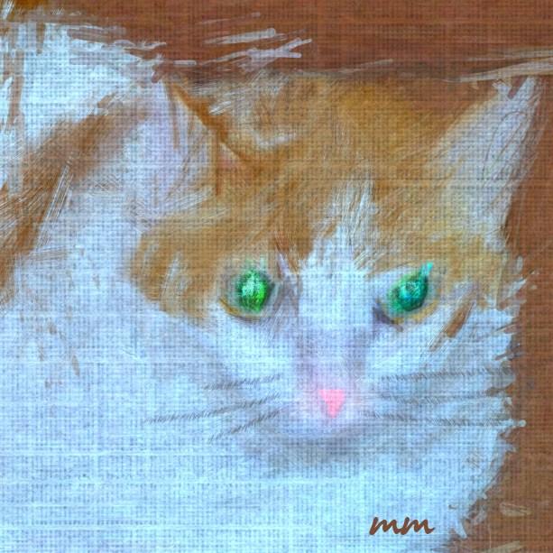 Ginger the Cat Portrait