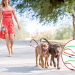 Laisse double pour chien zéro enchevêtrement (à enrouleur)
