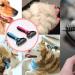 Brosse de toilettage pour chien et chat – peigne râteau spécial démêlage