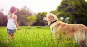 Make Your Dog Smell Better