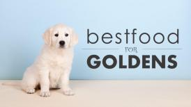 Best Diet for Your Golden Retriever
