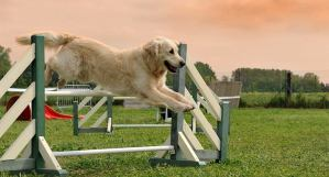 Dog from Jumping Up