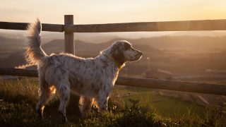 Guide on Choosing Dog Fence