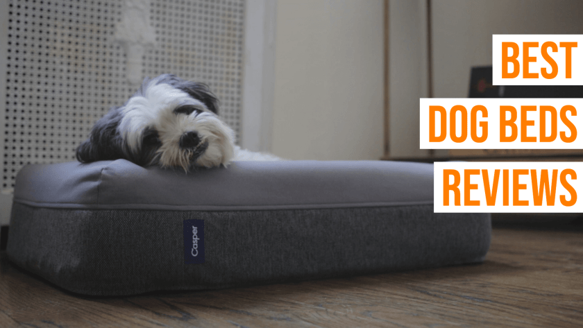 Best Dog Beds Reviews