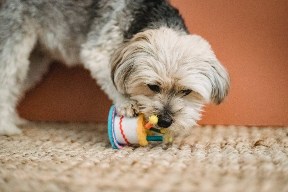 the best indestructible dog toys for chewers