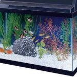 All-Glass-Aquarium-AAG10015-Tank-Black-15-Gallon-0
