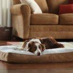 Animal-Planet-Sherpa-Pet-Bed-Large-0-0
