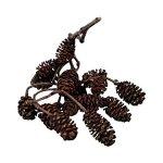 Efilwen-Alder-Cones-30g-Decorative-Shrimps-Invertebrates-Betta-Fish-Aquarium-Antibacterial-Antifungal-Properties-0