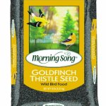 Morning-Song-Goldfinch-Thistle-0