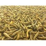 1000-Large-Live-Superworms-0
