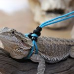 Adjustable-Reptile-Leash-Harness-Great-for-Reptiles-or-Small-Pets-100-Adjustable-One-Size-Fits-Most-0