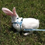 Alfie-Pet-by-Petoga-Couture-Kobi-Harness-and-Leash-Set-for-Small-Animals-like-Guinea-Pigs-and-Rabbits-0-1