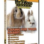 Caring-For-Your-Small-Pet-DVD-Rabbit-0