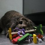 Crazy-Jingle-Tossing-Rabbit-Toy-0-0