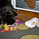 Crazy-Jingle-Tossing-Rabbit-Toy-0-1