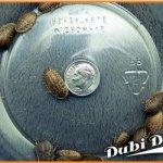 Dubia-Roaches-Medium-34-66-Grams-Average-Count-200-0
