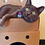 HumaniacTM-Cat-Castle-Pkt-15-0-0