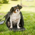 Iconic-Pet-FurryGo-Universal-Collapsible-Airline-Carrier-Small-Black-0-2