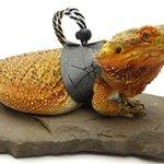 Ogle-Lizard-Leash-Limited-Edition-Black-Web-0-2