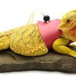 Ogle-Lizard-Leash-Limited-Edition-Pink-0-2