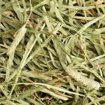 Small-Pet-Select-12oz-2nd-Cutting-Timothy-Hay-0-0
