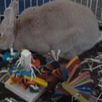 The-Tree-Pet-Rabbit-Toy-0-1