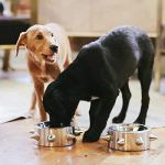 Unleashed-Life-Bruno-Collection–Stainless-Dog-Dish-Cat-Bowl-for-FoodWater-0-2