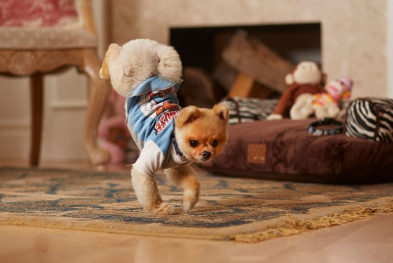 What Kind Of Dog Is Jiffpom