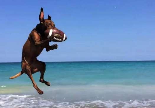 Dog Friendly Beaches Florida