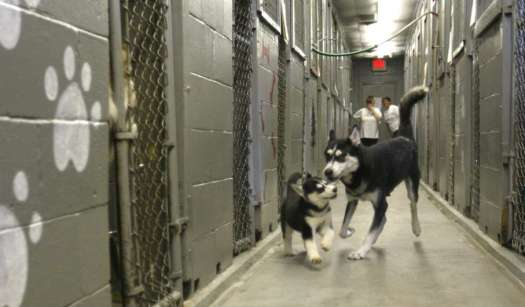 Dog Shelters In Nj