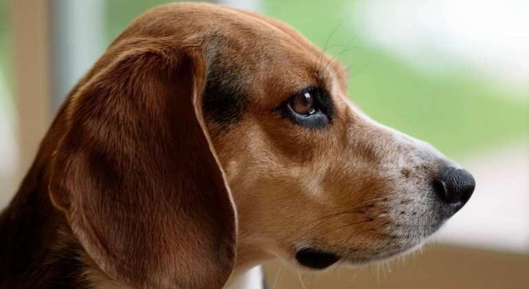Dogs For Sale On Craigslist